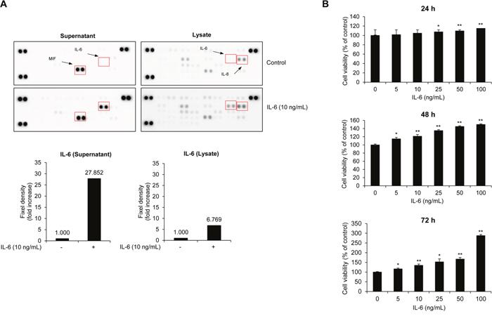 IL-6 activates MM cell proliferation.