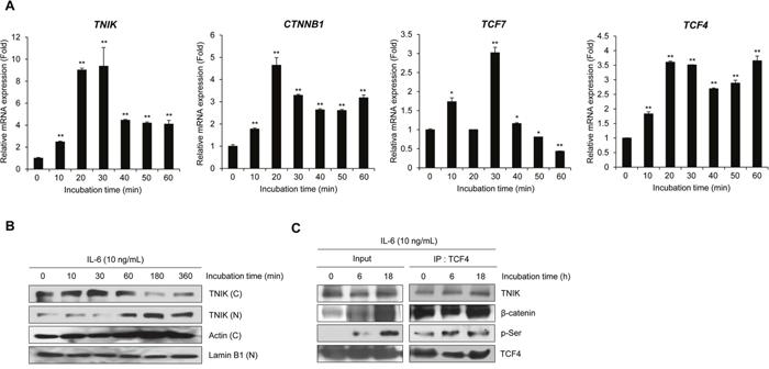 IL-6 activates TNIK expression and Wnt target gene transcription.
