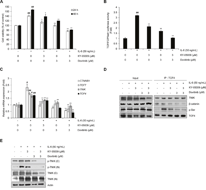 Inhibition of TNIK suppresses IL-6-induced proliferation and the Wnt signaling pathway in MM cells.