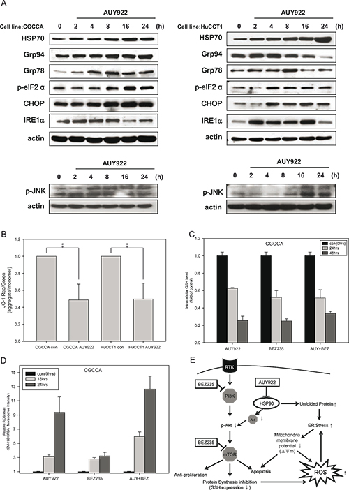 NVP-AUY922 induced ER stress and mitochondrial damage, which was fueled by oxidative stress when combined with NVP-BEZ235.