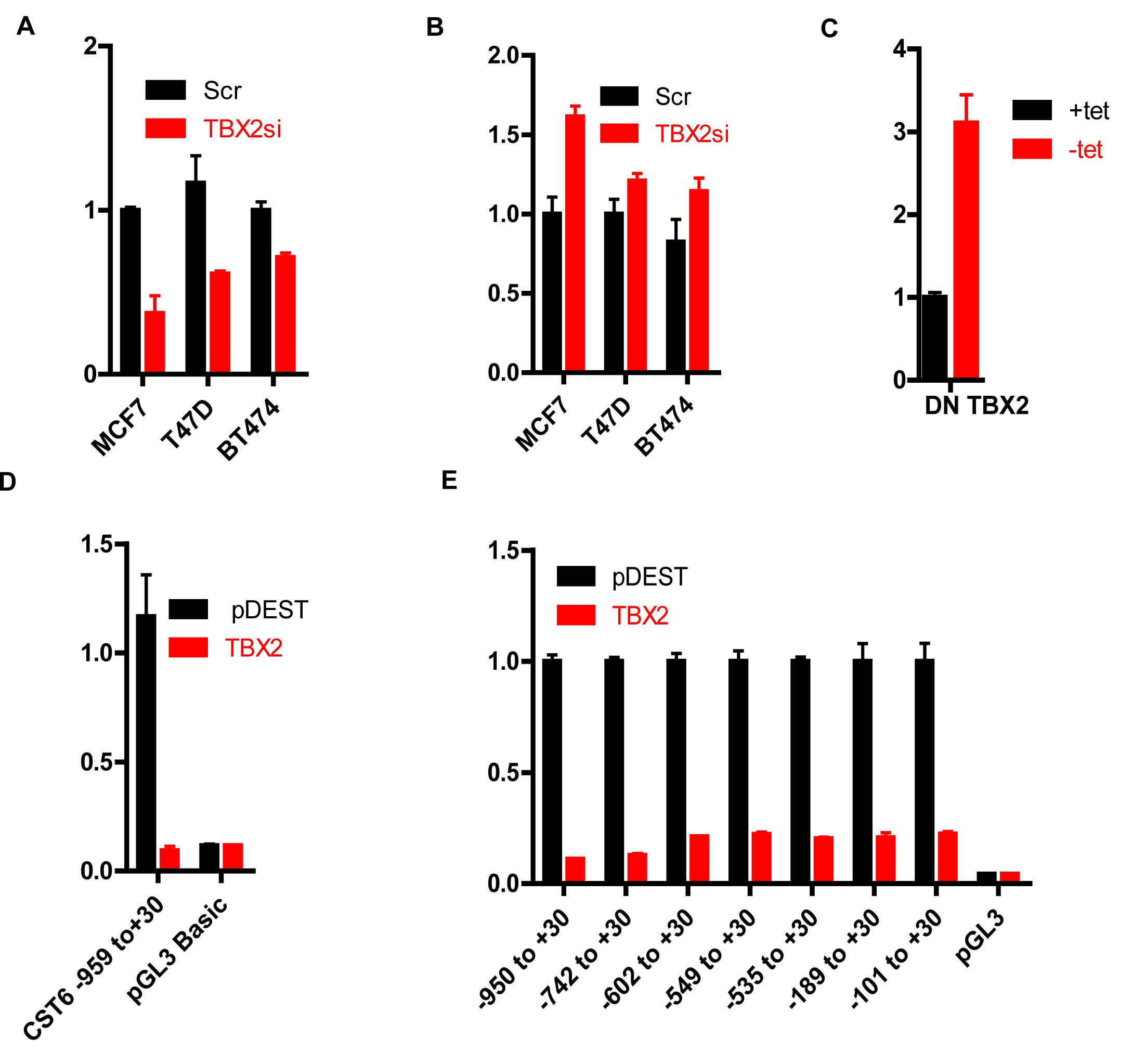 TBX2 represses the CST6 proximal promoter.