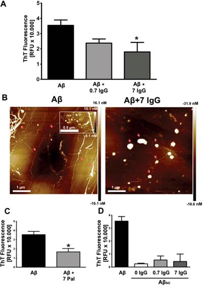 IgG inhibits amyloid aggregation.