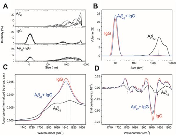 Effect of IgG on Aβ oligomerization.