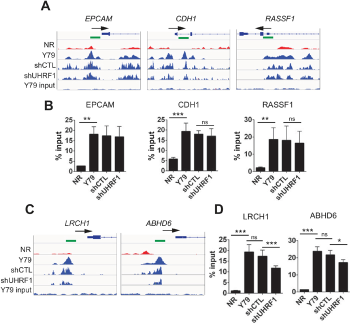 Effects of UHRF1 knockdown on promoter methylation of selected gene loci.