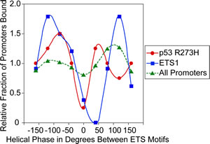p53 R273H and ETS1 exhibit preferred binding corresponding to the helical phase between ETS motifs.