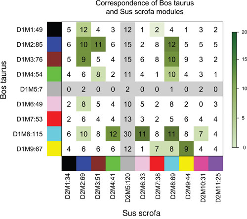 Correspondence of Bos taurus-specific modules and Sus scrofa-specific modules.