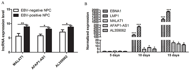 High MALAT1, AFAP1-AS1 and AL359062 levels were related to EBV infection.