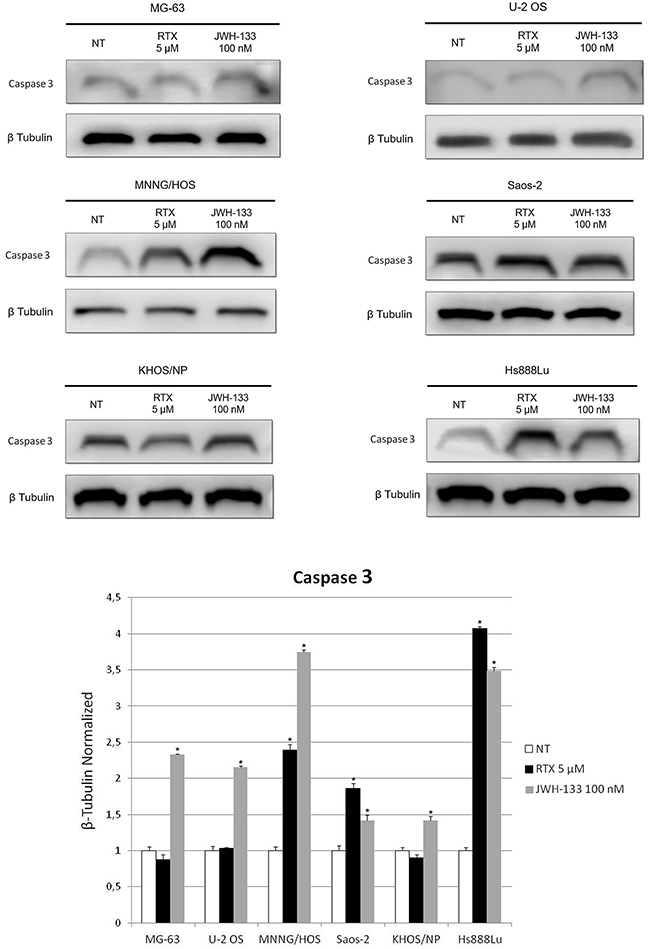 Effects of RTX and JWH-133 on Caspase 3 protein expression levels.
