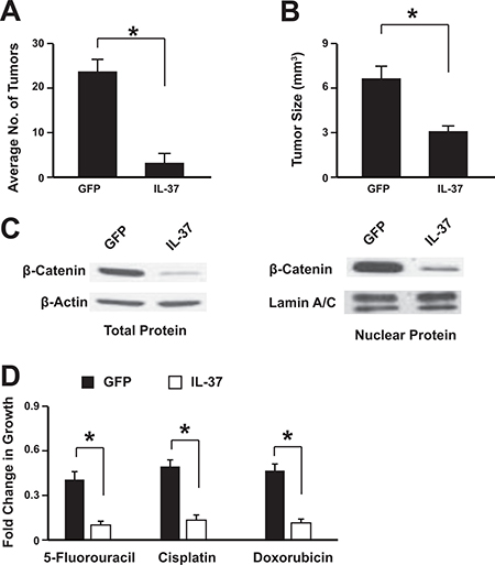 IL-37 suppresses colon tumorigenesis in vivo.