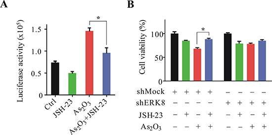 JSH-23 inhibits ERK8 promoted As2O3-induced lung cancer cell death.