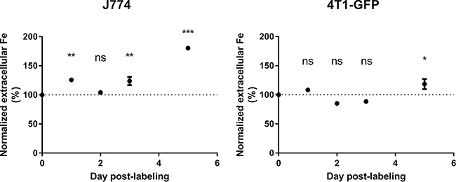 Extracellular iron levels increase in J774 macrophages after MIRB labeling.