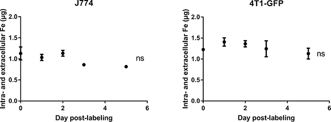 The intra- and extracellular iron pools do not vary with time after SPIO labeling in both 4T1-GFP and J774 cells.