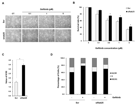 Inhibition of Rab25 expression reverses sensitivity to gefitinib.