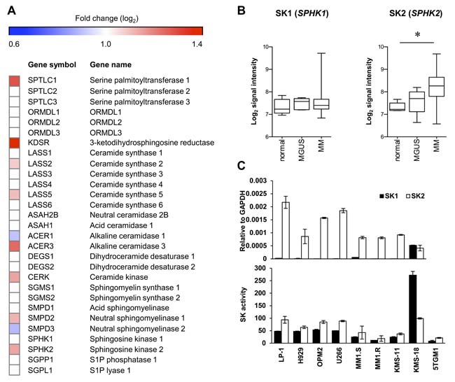 SK2 has higher expression than SK1 in myeloma.