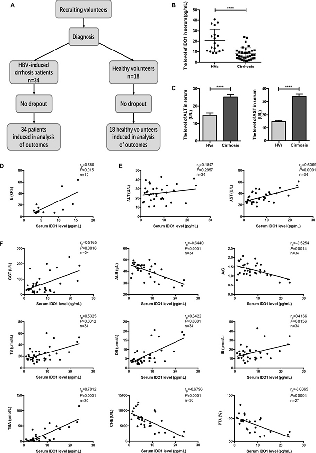 The serum level of IDO1 was decreased in patients with HBV-induced cirrhosis and positively correlated with the degree of cirrhosis.