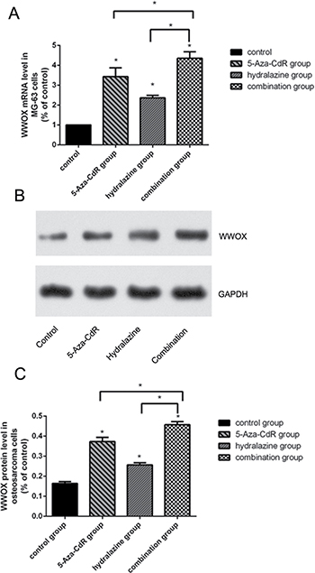 DNA methylation inhibitors increased WWOX expression in MG-63 cells