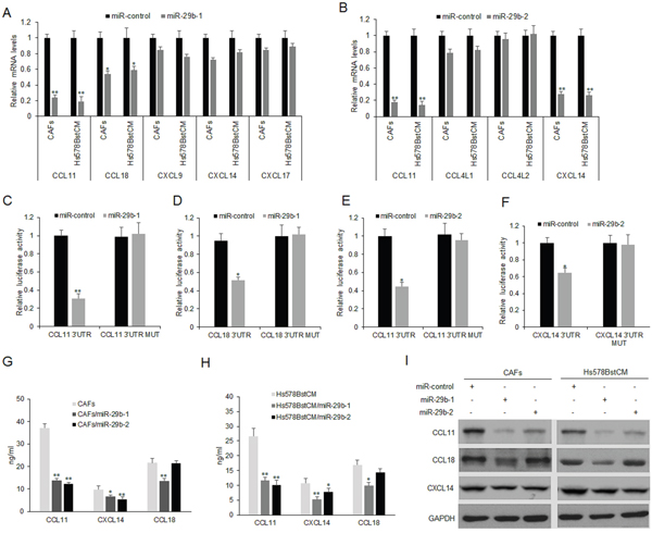 MiR-29b regulates CCL11 and CXCL14 expression in fibroblasts.