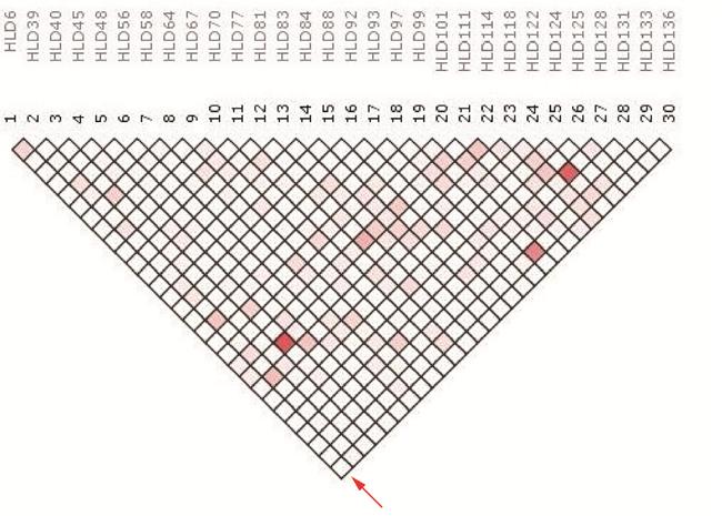 The LD analysis schema between the 30 Indel loci utilizing the SNPAnalyzer 2.0 program.