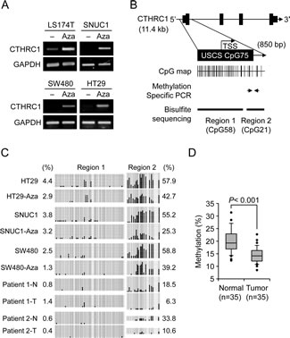 Correlation of CTHRC1 expression with CpG methylation in the prompter region.