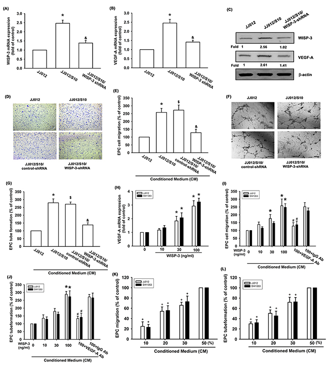 WISP-3 promotes VEGF-A production and angiogenesis in human chondrosarcoma.