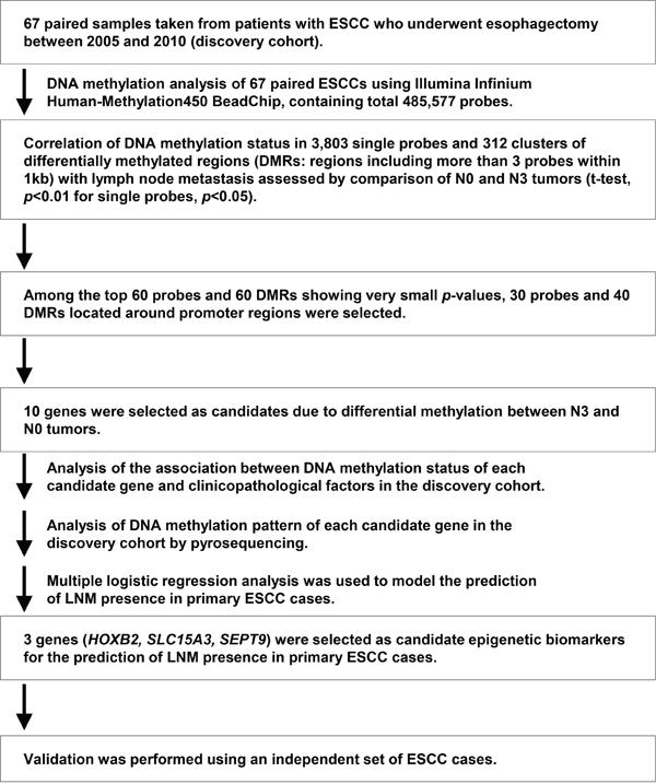 Oncotarget | Genome-wide screening of DNA methylation associated