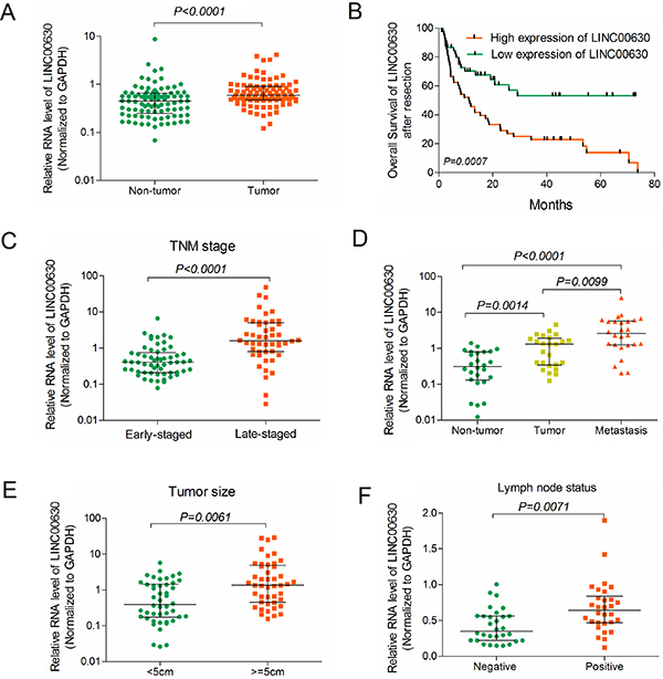 Clinically relevant of linc00673 predicts poor prognosis in NSCLC patients.