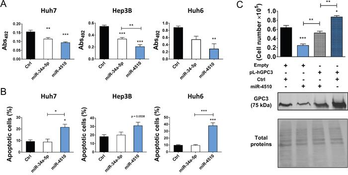 MiR-4510 acts as a tumor suppressor in vitro.