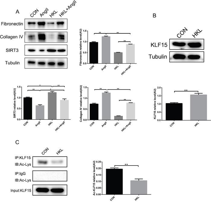 Honokiol activates SIRT3-KLF15 signaling.
