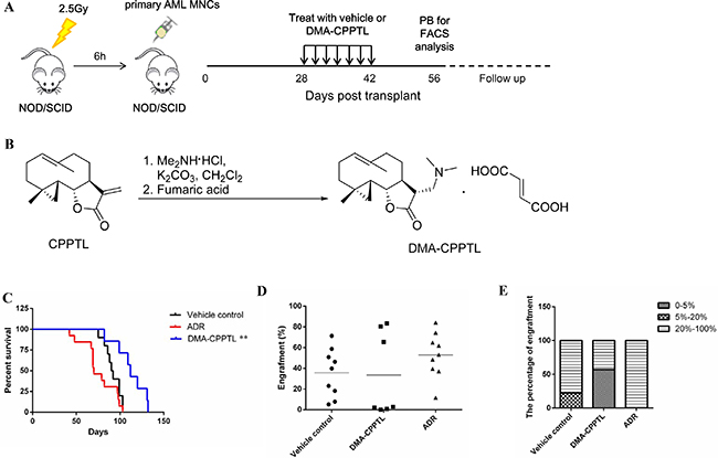 CPPTL eliminated AML cells in vivo and prolonged survival in a mouse model.