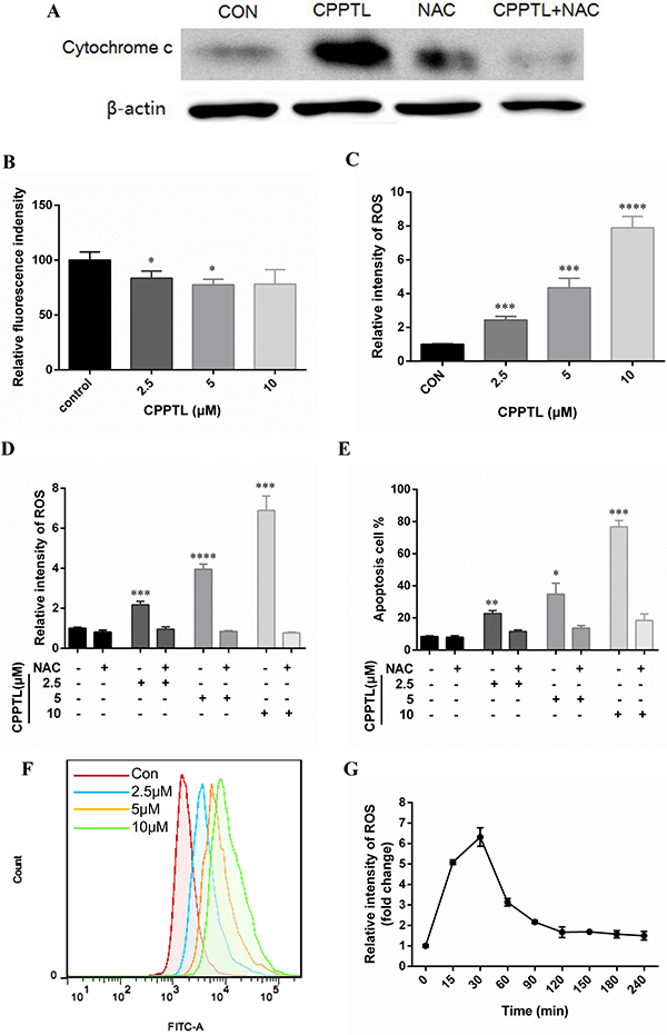 CPPTL induced apoptosis by stimulating ROS generation.