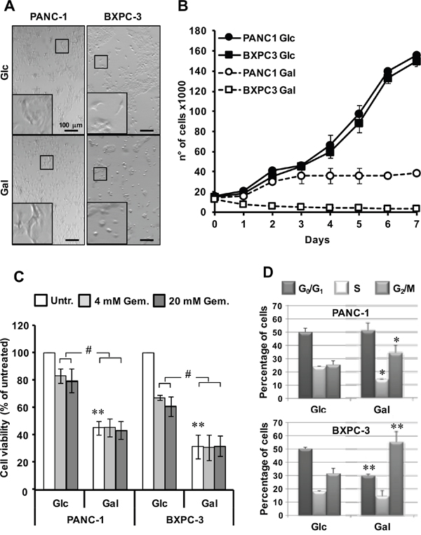 Effect of glucose deprivation/substitution on cell viability and cell cycle in PANC-1 and BXPC-3 cell lines.