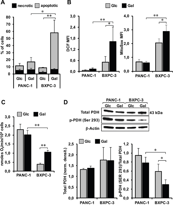 Effect of glucose deprivation/substitution on apoptosis, ROS generation, oxygen consumption and activation state of PDH in PANC-1 and BXPC-3 cell lines.