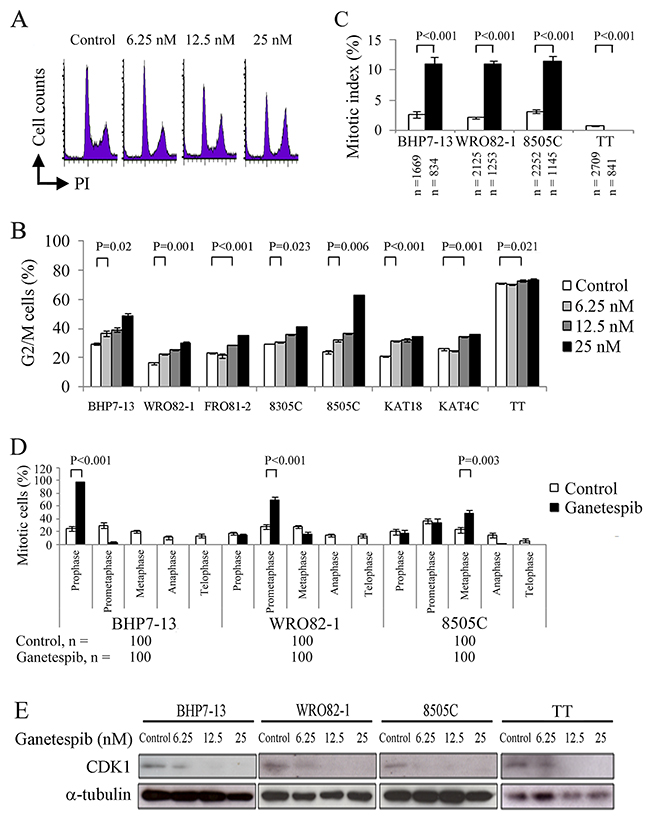 Ganetespib decreases CDK1 expression and inhibits cell cycle progression in G2/M phase.