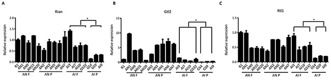 Expression of Rain, Gtl2 and Rtl1 in AN and AI cell lines.
