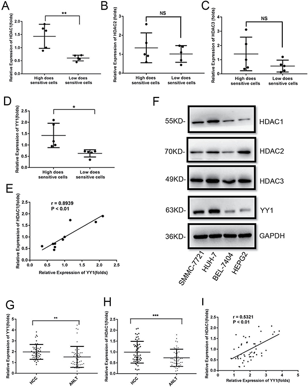 YY1 expression is positively related to HDAC1 in HCC cell lines and tumor tissues.