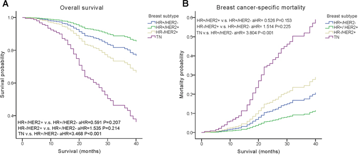 Weighted Kaplan–Meier curves of overall survival (OS) and breast cancer-specific mortality (BCSM) based on the molecular subtypes.