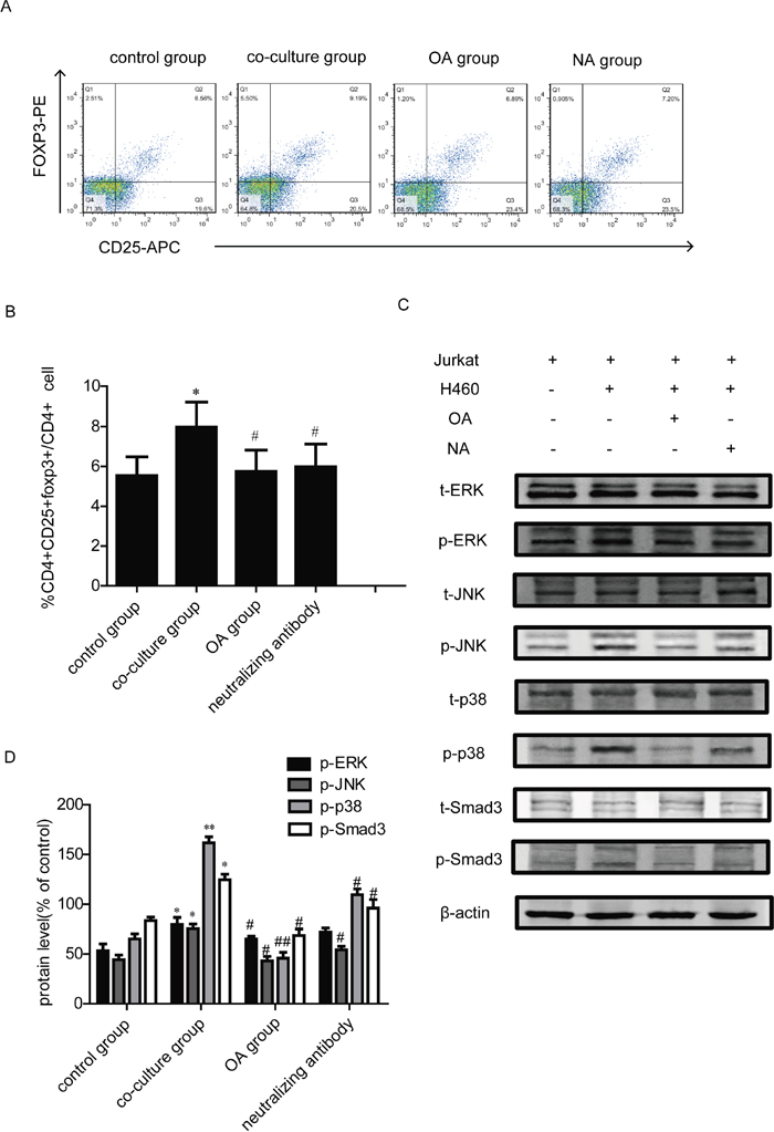 Effects of TGF-β1 neutralizing antibody on Tregs generation in co-culture model.