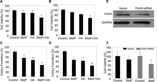 FAAH inhibition enhances the anti-proliferative activity of Met-F-AEA in NSCLC cell lines.