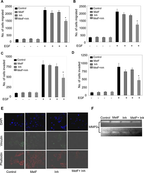 FAAH inhibition enhances the anti-migratory and anti-invasive activities of Met-F-AEA in NSCLC cell lines.