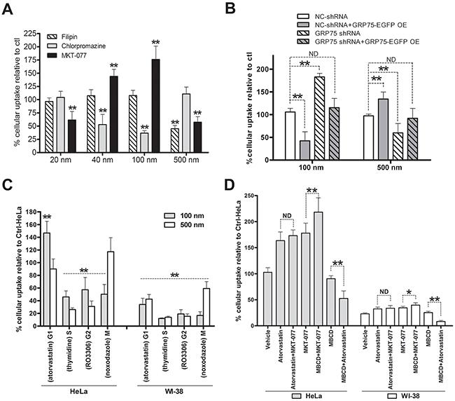GRP75 targeting by MKT-077 enhances G1-phase-privileged uptake of 100 nm nanomicrospheres.