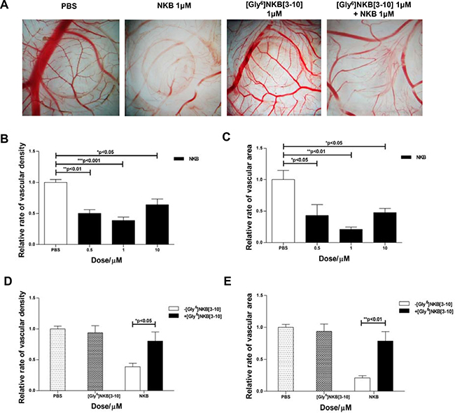 The anti-angiogenic effect of NKB mediated by NK3R on CAM.