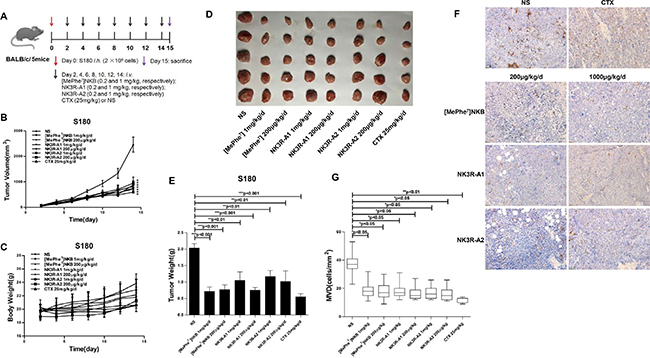 Effects of analogues, NK3R-A1, NK3R-A2 and [MePhe7]NKB, on tumor growth in S180 sarcoma-bearing BALB/c mice.