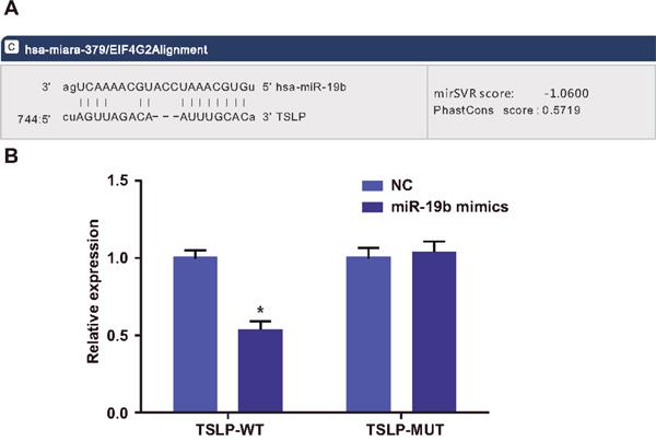 Dual luciferase reporter gene assay to verify TSLP as a target gene of miR-19b.