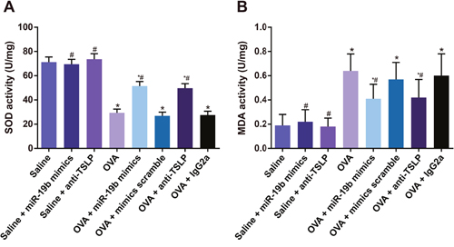 MDA levels and SOD activity in mouse lung tissues.