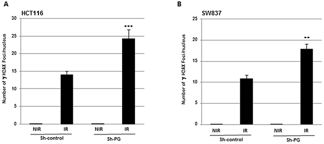 Inhibition of PG gene expression enhances the level of DNA damage induced by radiation.