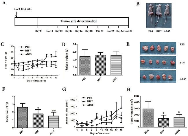 Tumor growth suppression in vivo by the cultures of BI87 and AD05.