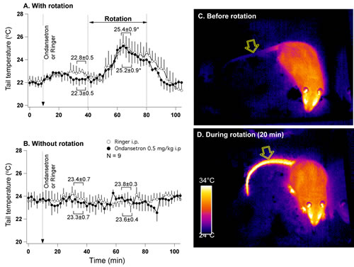 Fig 3: Provocative motion causes rise in tail temperature indicative of vasodilatation.