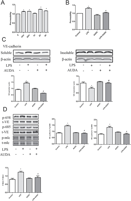 AUDA suppressed LPS-induced hyperpermeability by targeting Adherens Junction Components.