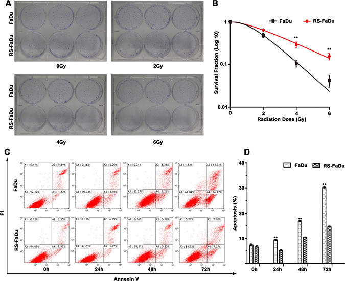 Radioresistance measurement by clonogenic survival assay and apoptosis assay.