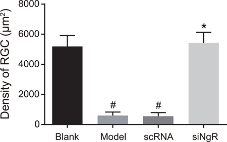 The effects of NgR gene silencing on mRGC cell density in NMDA-treated murine retinal tissues.